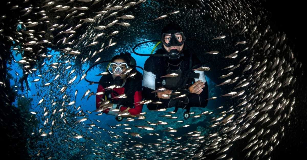 Scuba Fishes and others